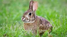 wildlife in your backyard gallery