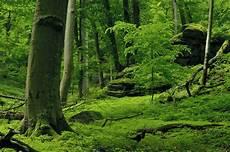 Malvorlagen Urwald Europa Ancient Forest Rothwald Biorama