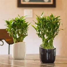 10 best low light houseplants costa farms