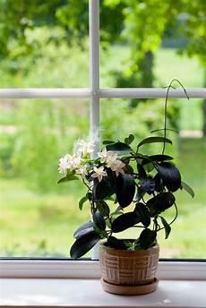 Endlich Wieder Durchschlafen 7 Luftreinigende Pflanzen