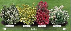 arbuste croissance rapide la haie persistante 4 arbustes willemse