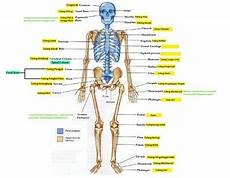 10 Fakta Tentang Tulang Manusia Blogcask