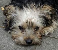Kostenlose Malvorlagen Hunde Ausmalbild Kleiner Hund Kostenlose Malvorlagen