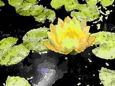 Blumen Malvorlagen Kostenlos Xyz Seerose Im Biotop Bildvorlage Zum Malen