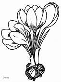 Flowers  8 Coloring Pages Page & Book For Kids