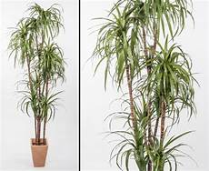 yucca palme pflegen yucca kunstpalme 240cm hier g 252 nstig bestellen