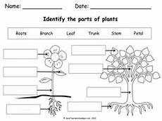 science plants ks1 worksheets 13580 parts of a plant a tree lesson plan worksheet teaching resources