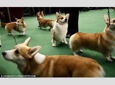 Martha Stewart at lunch with Westminster Kennel Club Dog