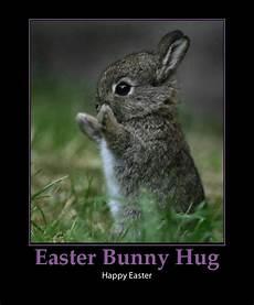 bunny quotes quotesgram