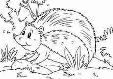 Ausmalbild Hase Und Igel Ausmalbilder Igel 03 Ausmalbilder Tiere
