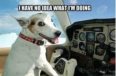 i have no idea how i do it i have no idea what i m doing pilot dog quickmeme