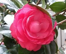 nomi fiori giapponesi hanakotoba il linguaggio dei fiori tradurre il giappone