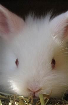 Kaninchen Als Haustiere F 252 R Kinder