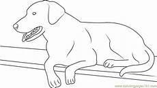 best black labrador coloring page free coloring