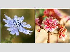 30 Beautiful Flower Images   Pictures of Pretty Flowers