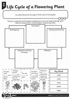 worksheets on plants cycle 13606 adapting plant cycle worksheet for students who are blind or low vision paths to literacy