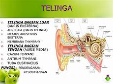 Anatomi Sistem Panca Indra