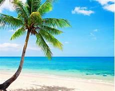 Hawaiian Tropical Palm Tree by Lonely Palm Tree Tropical Coast Sea Wallpapers