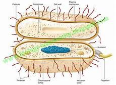Materi Archaebacteria Dan Eubacteria Lengkap Generasi