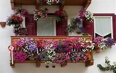 fiori per terrazzi al sole il segreto per avere un bellissimo balcone fiorito