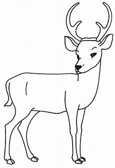 cerf dessin facile dessin de cerf les dessins et coloriage