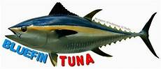 Gambar Gambar Ikan Tuna Kartun Gambarpedia Di Rebanas