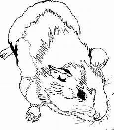 meerschweinchen 2 ausmalbild malvorlage tiere