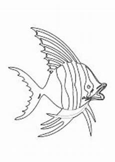 malvorlage fisch karpfen ausmalbilder fische malvorlage
