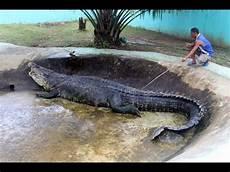 Das Gr 246 223 Te Krokodil Der Welt