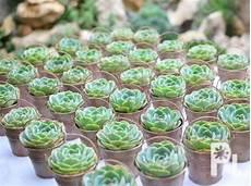 wedding souvenirs favors giveaways made of succulent plants general santos city philippinen