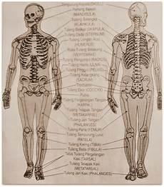 Metamorphosis Sistem Rangka Manusia