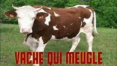 vache qui meugle le cri de la vache le bruit des animaux