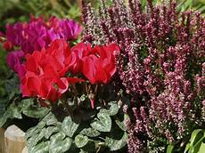 fiori perenni da vaso balconi fioriti garden bedetti como