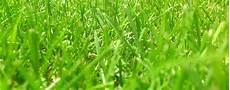 Rasen Neu Anlegen Davor Unkraut Entfernen Rasenneuanlage