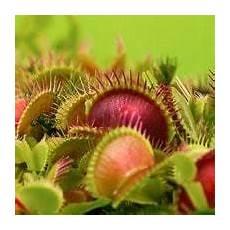 fleischfressende pflanzen haltung und pflege taudan