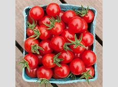 how to water tomatoes plants