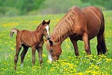 Op Versicherung Pferd - pferde op versicherung f 252 r brandenburger pferde