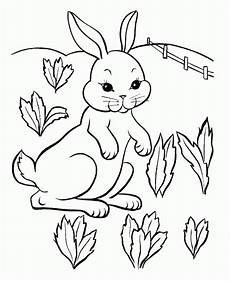 get this baby bunny coloring pages for toddlers 41738