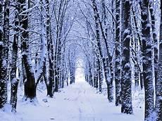 Winter Woods Wallpaper winter woods snow wallpaper is the ascendancy of