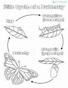 Malvorlagen Cycle Coloring Pages Butterfly Cycle Coloring Home