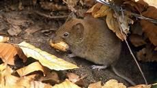 tote ratte entsorgen kot m 228 usen und ratten machten mann aus m 246 hnesee krank