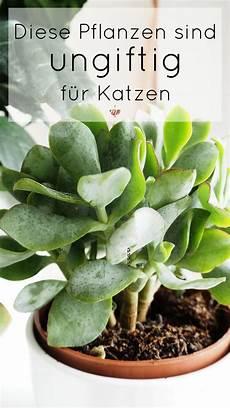 welche pflanzen sind ungiftig f 252 r katzen kr 228 utergarten