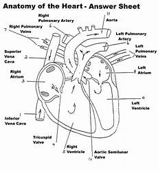anatomy heart diagram labeled anatomy and physiology heart
