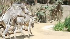 am zoo los angeles zoo 2016