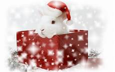 merry and happy new year christmas bunny wallpapers hd wallpapers 94384
