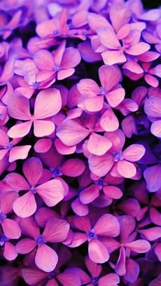 blue green flower wallpaper iphone purple flower wallpaper pink iphone apple iphone