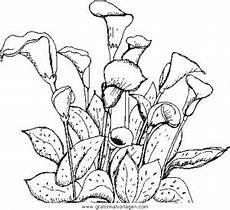 Malvorlagen Gratis Natur Blumen 420 Gratis Malvorlage In Blumen Natur Ausmalen
