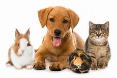 Progressive Pet Insurance Review For 2020 Coverage