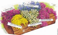 Plante Rocaille Pivoine Etc