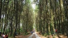 Pinusan Kragilan Tempat Selfie Baru Di Jogja Dengan Latar